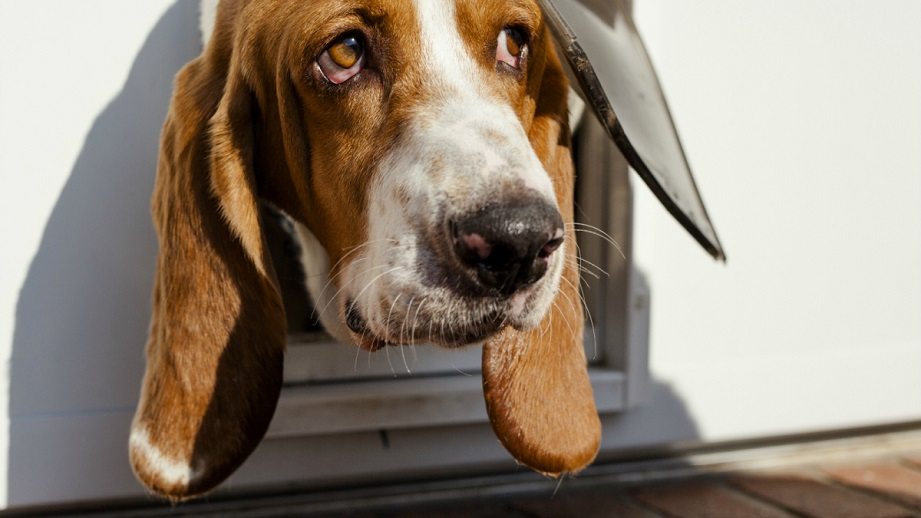Easy to follow guidelines about how to weatherproof a dog door